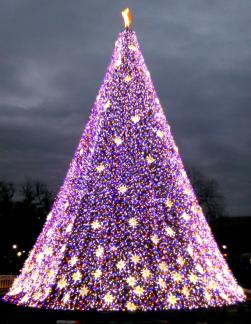 DC Christmas Tree 2016.png